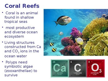 Introduction to Coral Reefs