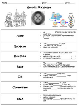 Introduction to DNA and Genetic Vocabulary