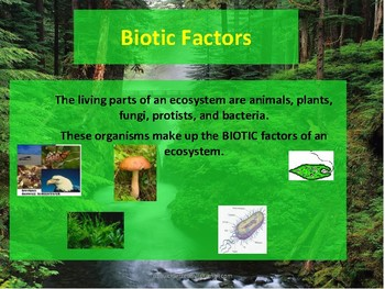 Introduction to Ecology:Ecology Wheel Activity Sheet with Power Point