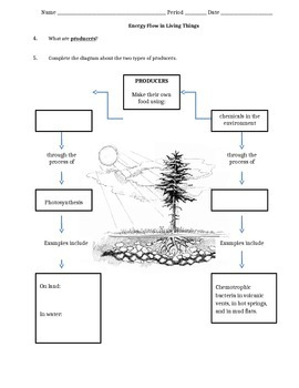 NGSS Introduction to Ecology and Energy Flow - Scaffolded Worksheet