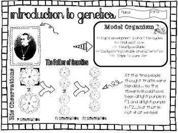 Introduction to Genetics BUNDLE 1- Doodle-it! Notes