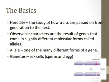 Introduction to Genetics Notes