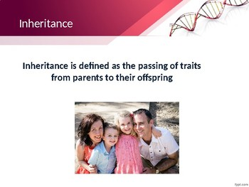Introduction to Genetics PowerPoint