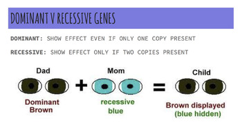 Genetics Lesson & Activity: Make Genetics FUN with Forensic Science!