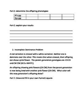 Introduction to Genetics Worksheet