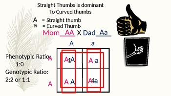 Introduction to Genetics and Punnett Squares