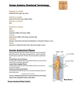 Introduction to Human Anatomy Terminology