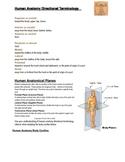 Introduction to Human Anatomy Terminology