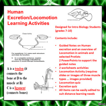 Human Excretion and Human Locomotion Learning Activities