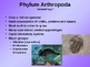 Introduction to Invertebrates