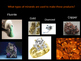 Introduction to Minerals Powerpoint