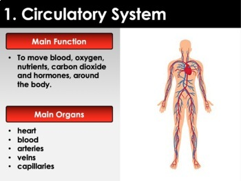 Organ Systems: An Introduction