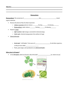 Introduction to Photosynthesis Guided Notes with Diagrams