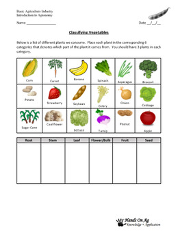 Lesson Plan: Introduction to Plant Anatomy & Physiology