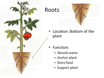 Introduction to Plant Parts and their Functions
