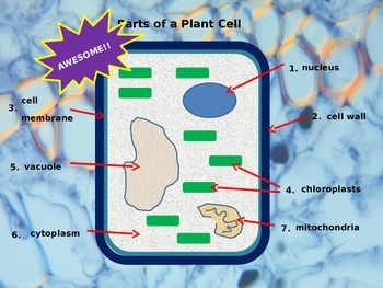 Introduction to Plant and Animal Cells