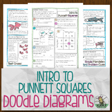 Introduction to Punnett Squares Doodle Diagrams