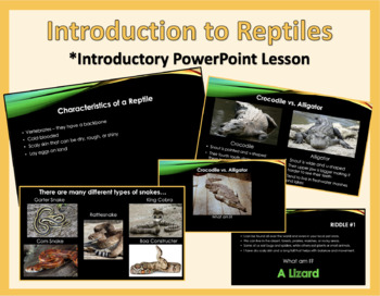Introduction to Reptiles Lesson