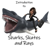 Introduction to Sharks, Skates and Rays