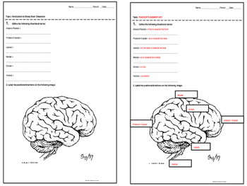 Introduction to Sheep Brain Dissection Half-Sheets