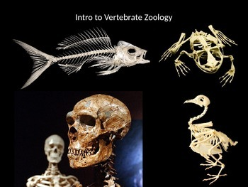 Introduction to Vertebrate Zoology PowerPoint Presentation