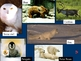 Introduction to biomes Powerpoint activity