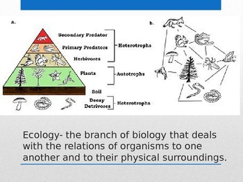 Introduction to ecosystems Vocabulary