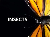 Insect Life Cycle