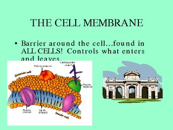 Introduction to the Cell PowerPoint