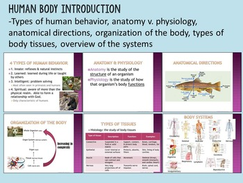 Introduction to the Human Body (Body Tissues & Systems)