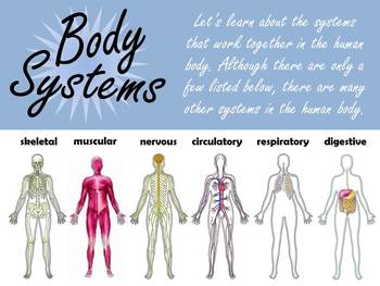Introduction to the Human Body Systems (Plus Creative Project!!!)