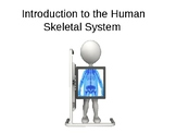 Introduction to the Human Skeletal System