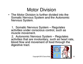 Introduction to the Nervous System - Bundled Unit in WORD