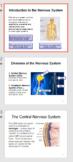 Introduction to the Nervous System - Bundled Unit PDF