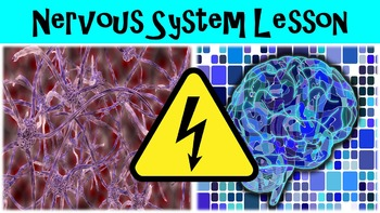 Nervous System Introduction No Prep Lesson with Power Point, Worksheet and Bonus