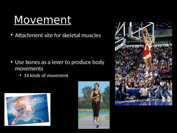 Introduction to the Skeletal System
