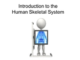 Introduction to the Skeletal System Package