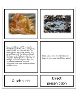 Introduction to Types of Fossils