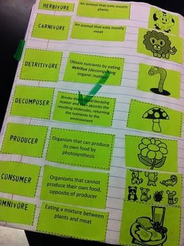 Introductory Ecology Vocabulary Matching