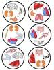 Human Body Spot It/Dobble/Vocabulary Game