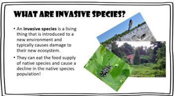 Invasive Species PowerPoint Presentation Exotic