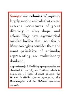 Invertebrata: Porifera (sponges)