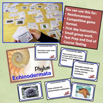 Invertebrate Animal Phyla Card Sort Game