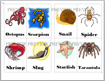invertebrate bingo game animal classification by marcia murphy