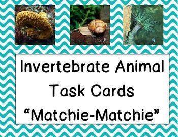 Invertebrate Animals (Task Card Matching)