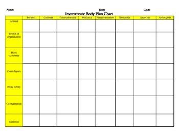 Invertebrate Body Plan Chart Activity