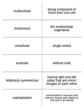Invertebrate Classification Vocabulary Flash Cards for Invertebrate Biology