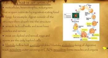 Invertebrate Evolution