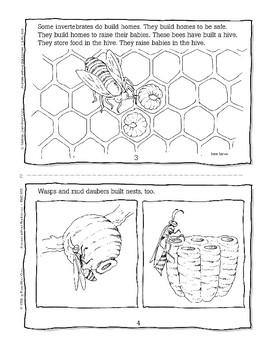 Invertebrate Homes