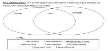 Invertebrate Introduction Quiz or Homework